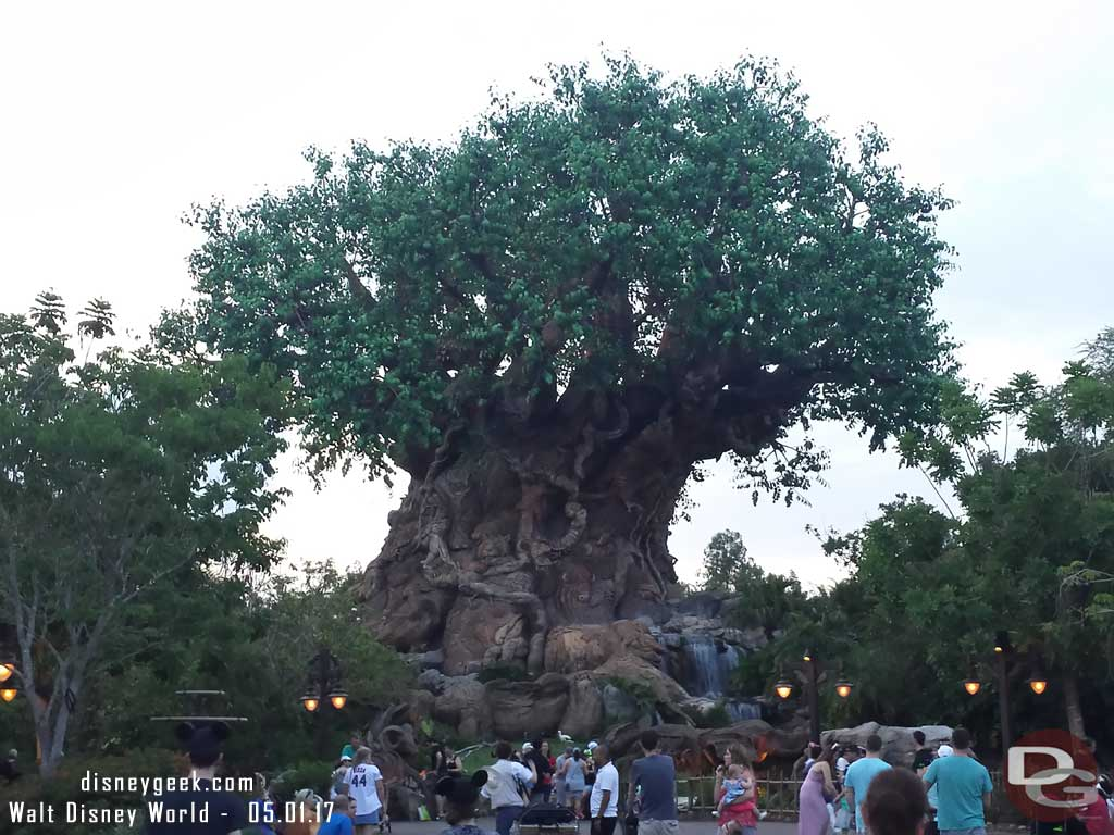 Passing by the Tree of Life again