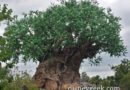 Tree of Life at Disney's Animal Kingdom this afternoon