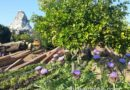 Tomorrowland Entrance with Matterhorn & Purple Flowers (couple pics)