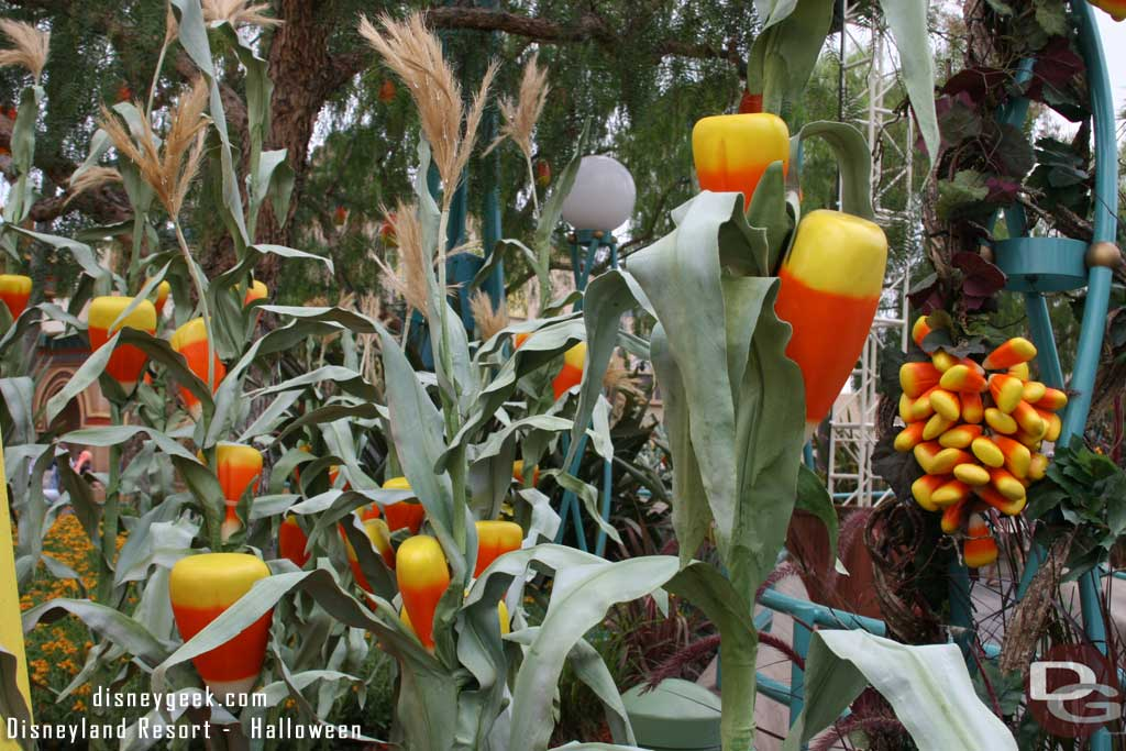 "Candy Corn ""growing"" in Candy Corn Acres at Disney's California Adventure"