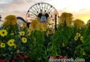 Mickey's Fun Wheel as the sun is setting in Disney California Adventure