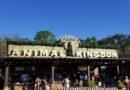 Starting today at Disney's Animal Kingdom