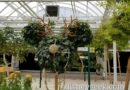 The Land greenhouses are decorated for the holidays