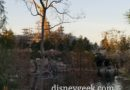 Rivers of America – My dinner view this evening