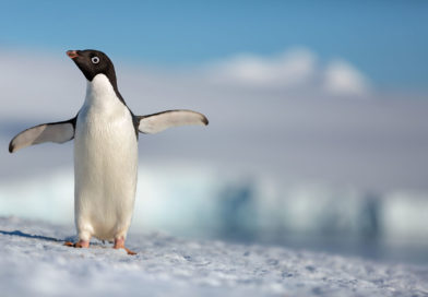 Disneynature Penguins Coming to Theaters Earth Day 2019 – Trailer & Image