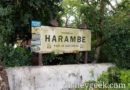 Next stop Harambe at Disney's Animal Kingdom