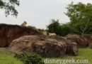 WDW Day 8: Pictures Disney's Animal Kingdom