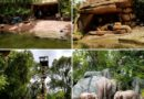 Jungle Cruise at the Magic Kingdom