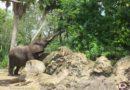 Guest Photos: Magic Kingdom & Animal Kingdom