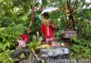 WDW Day 3: Jingle Cruise at the Magic Kingdom Pictures