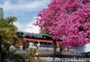 Springtime in Tomorrowland at Disneyland