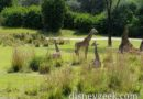 Pictures: Kilimanjaro Safari at Disney's Animal Kingdom