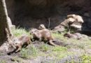 Pictures: Otter Grotto at Disney's Animal Kingdom
