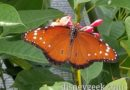 Pictures: Butterfly Garden at Epcot International Flower & Garden Festival