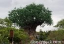 The Tree of Life as I head to the exit