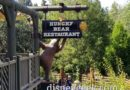 Hungry Bear Restaurant has a new sign along the walkway to Galaxy's Edge