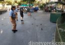 Several ducklings exploring New Orleans Square