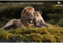 The Lion King – Can You Feel the Love Tonight?  TV Spot