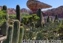 A quiet Ornament Valley in Cars Land – Racers are currently down