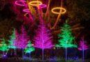 Downtown Disney 'Let it Glow' Trees