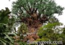 WDW Pictures: Tree of Life Garden Trail