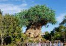 Starting my day at Disney's Animal Kingdom