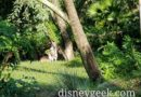 A Couple of Kangaroos in the Tree of Life Garden