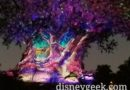 WDW Pictures: Random pictures from a night time walk through Disney's Animal Kingdom