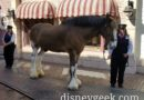 Danny the horse meeting guests in Town Square