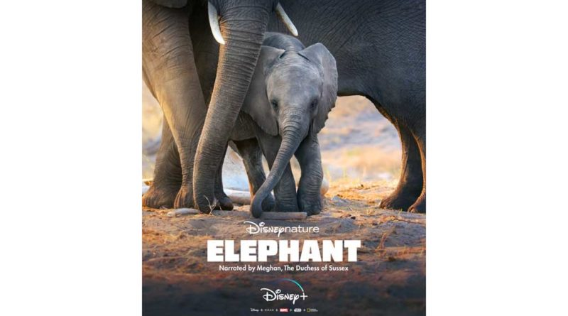 Disneynature - Elephant on DisneyPlus