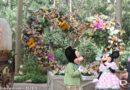 Disneyland 2014: Springtime Roundup @ Big Thunder Ranch