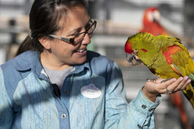 Jouy Luzania (Senior Trainer at Winged Encounters) holds Wizard a Red Fronted Macaw. (Charlene Guilliams/Disney)