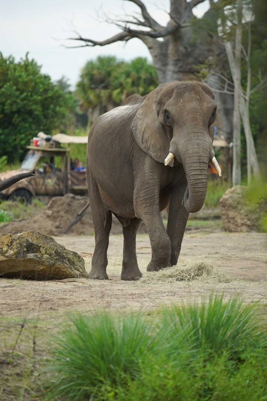 Maclean, Mac for short, the African Elephant. (Disney)