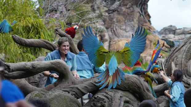 Keepers Ashley Majtyka, Robert Ng and Juoy Luzania with macaws at Winged Encounters – The Kingdom Takes Flight. (Disney)