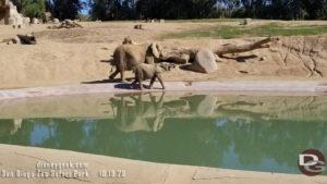 San Diego Zoo Safari Park - Elephants