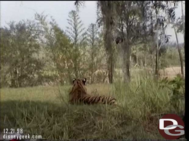 1998 Maharajah Jungle Trek Preview - Tigers