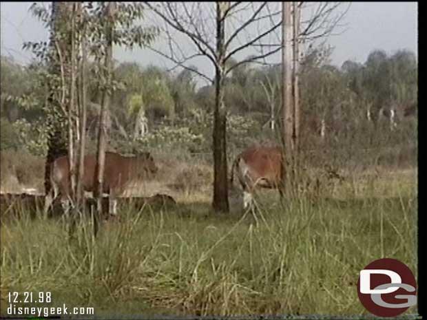 1998 Maharajah Jungle Trek Preview