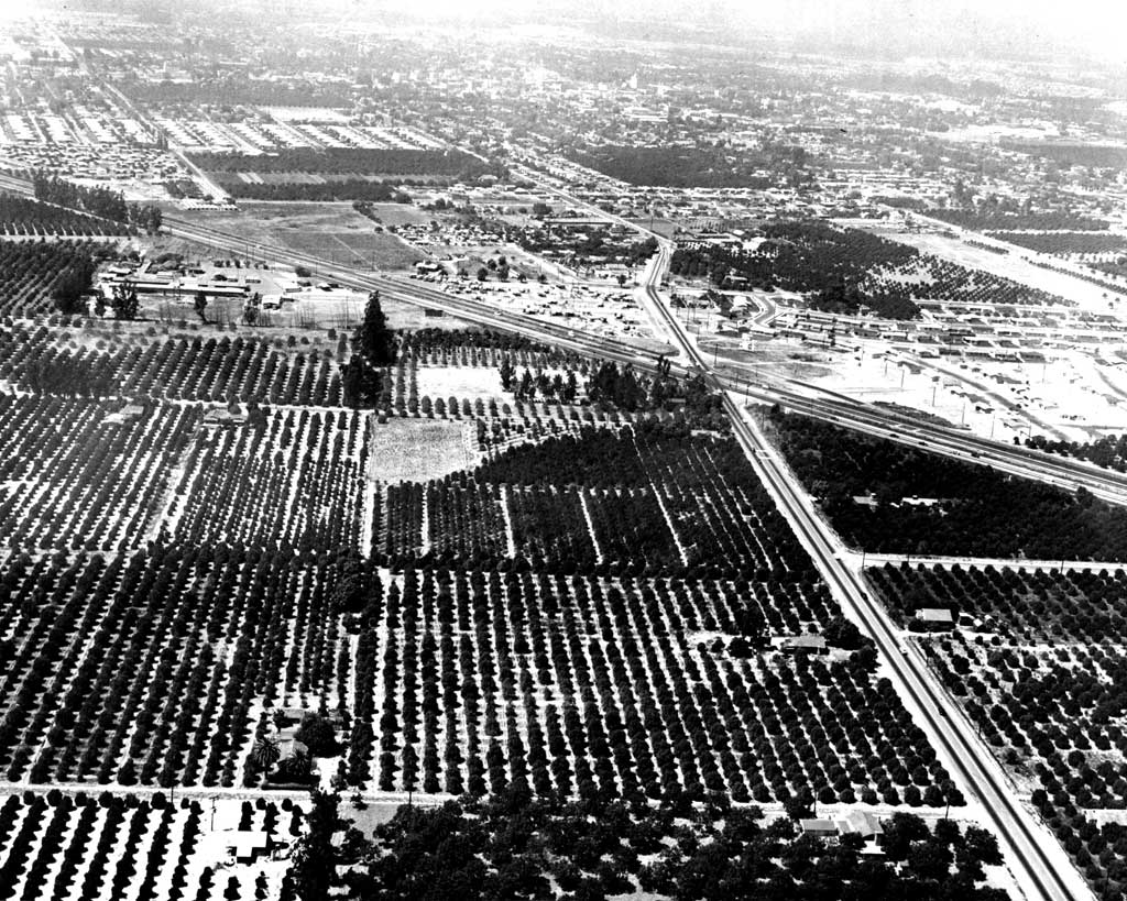 FUTURE SITE OF DISNEYLAND Ð- Originally covered with orange groves and made up of parcels of land owned by 17 different people, Walt Disney purchased 160 acres in Anaheim to build his dream of a place where parents and children could have fun Ð together.