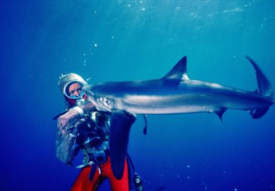 """Preview: Nat Geo's """"Playing with Sharks"""""""